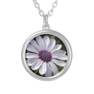 Osteospermum African Daisy Round Pendant Necklace