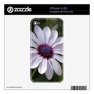 Osteospermum African Daisy iPhone 4S Decal