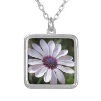 Osteospermum African Daisy Square Pendant Necklace