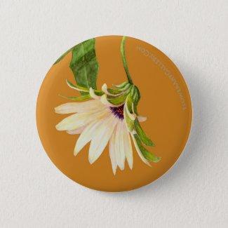 Osteospermum Bloom Button