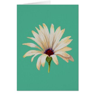 Osteospermum Bloom on Aqua Greeting Card