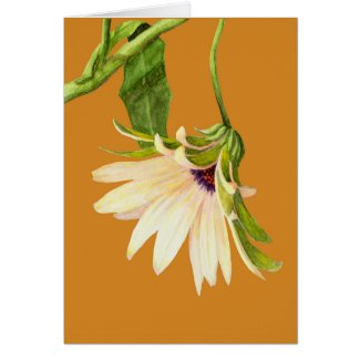 Osteospermum on Yellow Greeting Card