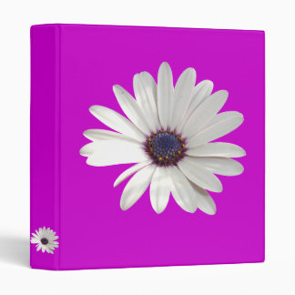 Osteospermum Daisy with Purple Centre Binder