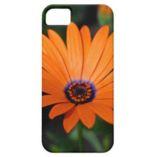 Osteospermum iPhone SE/5/5s Case