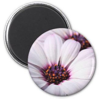Osteospermum Fridge Magnet