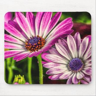 Osteospermum púrpura alfombrilla de ratón