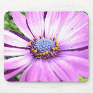 Osteospermum púrpura alfombrillas de ratones