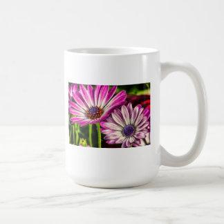 Osteospermum púrpura taza de café