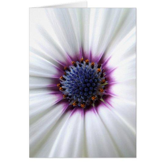 Osteospurmum Card