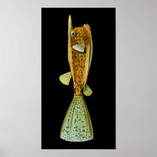 Ostracion cornutus (Boxfish), Haeckel Fine Art Poster