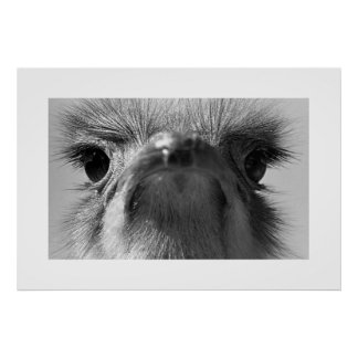 Ostrich#1-Poster Poster