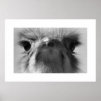 Ostrich#1-Poster Póster