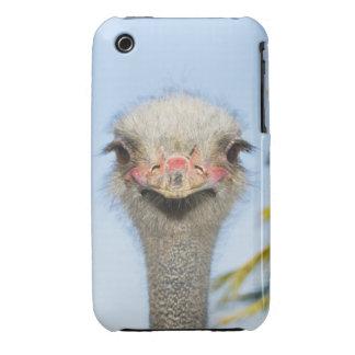 Ostrich (2) Case-Mate iPhone 3 case