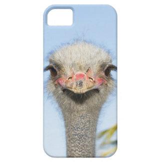 Ostrich (2) iPhone SE/5/5s case