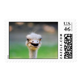 Ostrich 2 stamps