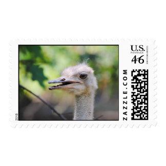 Ostrich 3 postage stamp