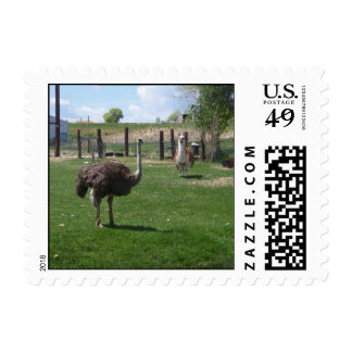 Ostrich and Llama Stamp