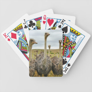 Ostrich Bird Bicycle Playing Cards