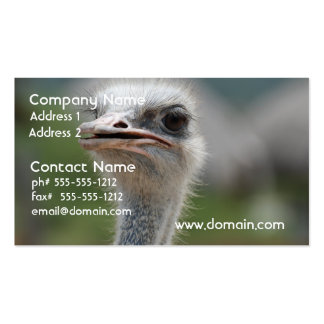 Ostrich Bird Double-Sided Standard Business Cards (Pack Of 100)