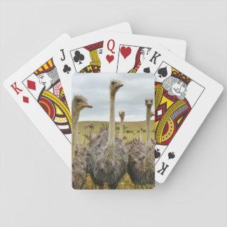 Ostrich Bird Card Decks
