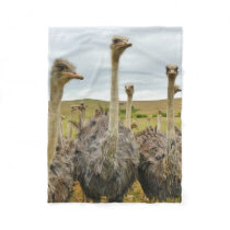 Ostrich Bird Fleece Blanket