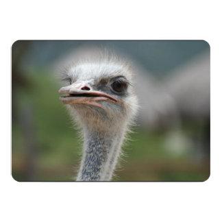 Ostrich Bird 5x7 Paper Invitation Card