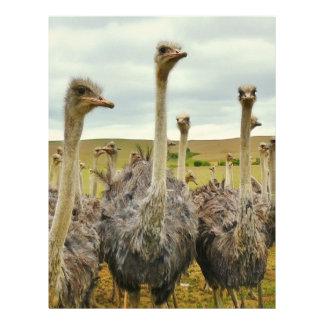 Ostrich Bird Letterhead