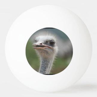 Ostrich Bird Ping-Pong Ball