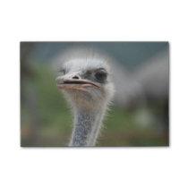 Ostrich Bird Post-it Notes