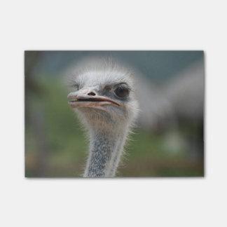 Ostrich Bird Post-it® Notes