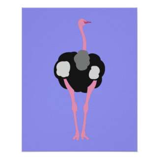 Ostrich Bird Poster