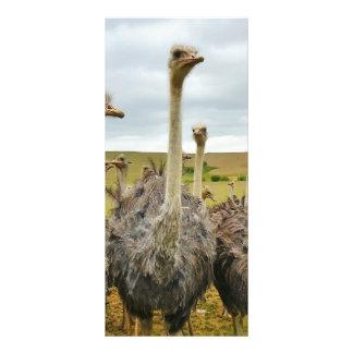 Ostrich Bird Rack Card