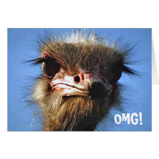 Ostrich Birthday Card