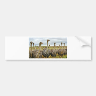 ostrich bumper sticker
