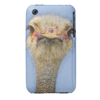 Ostrich Case-Mate iPhone 3 Case