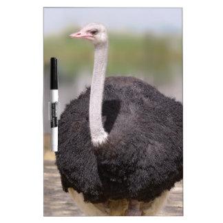 Ostrich Dry-Erase Board