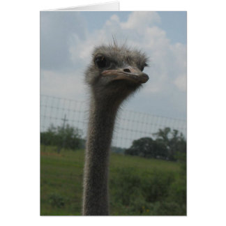 """Ostrich Face of """"I'm Sorry"""" Notecard"""