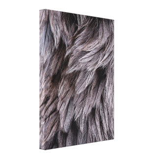 Ostrich Feathers Stretched Canvas Print