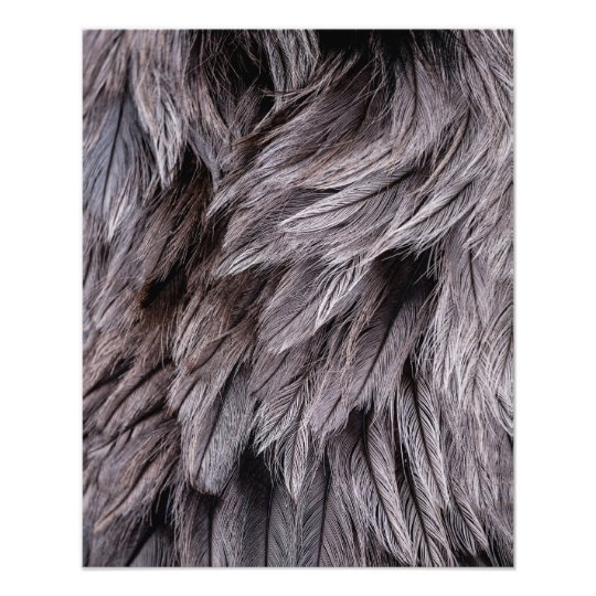 Ostrich Feathers Photo Print