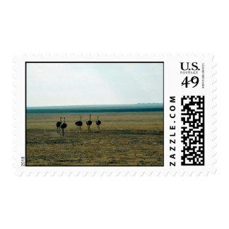 Ostrich Females Postage Stamp