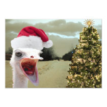 Ostrich Gets Excited Over Christmas Invitation