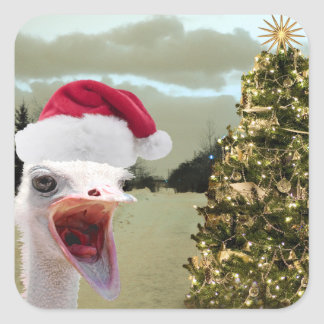 Ostrich Gets Excited Over Christmas Square Sticker