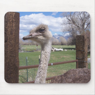 Ostrich Head Mouse Pad