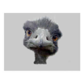 Ostrich head postcard