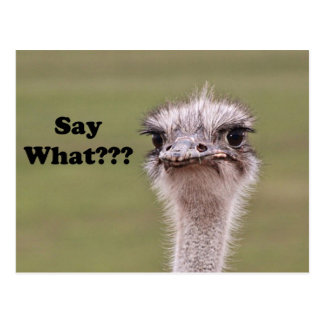 Ostrich Head Say What Photo Postcard