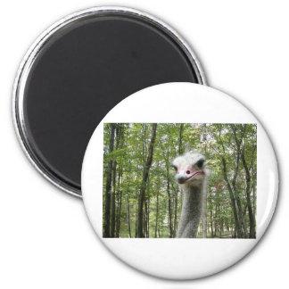 Ostrich Image 2 Inch Round Magnet