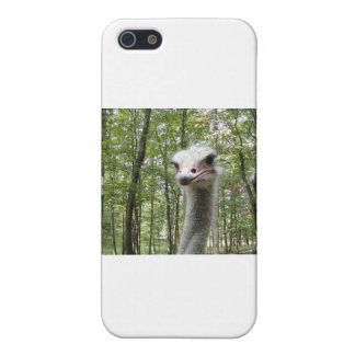 Ostrich Image iPhone SE/5/5s Cover