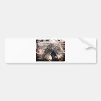 Ostrich.jpg Bumper Sticker