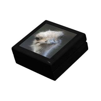 Ostrich Keepsake Box