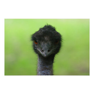 ostrich large poster